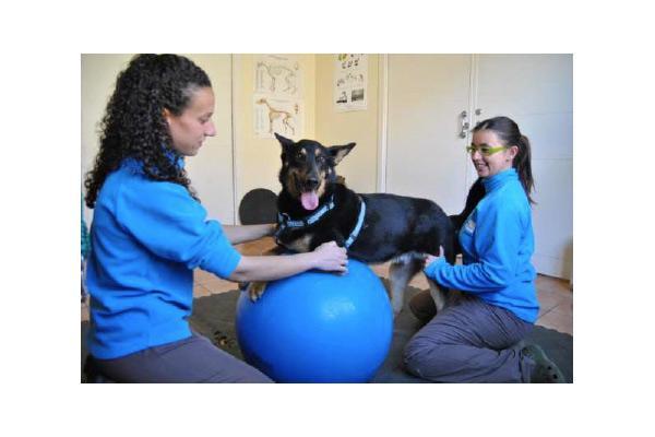 introduccion a la fisioterapia veterinaria el nuevo curso de colvet