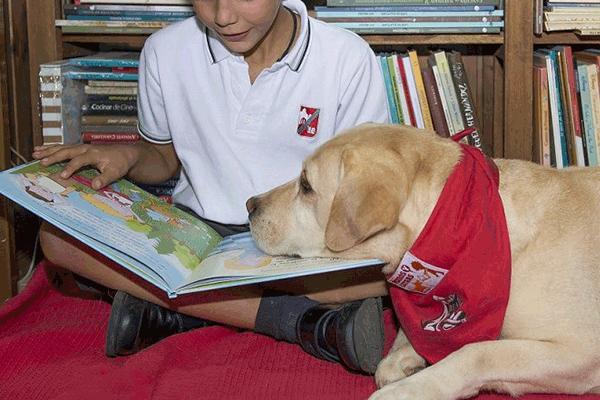 perros y letras cuando la lectura se convierte en algo divertido