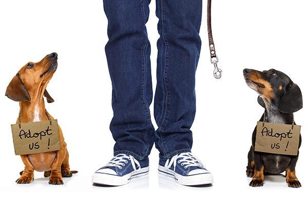 la cifra de abandono de perros y gatos sigue estancada