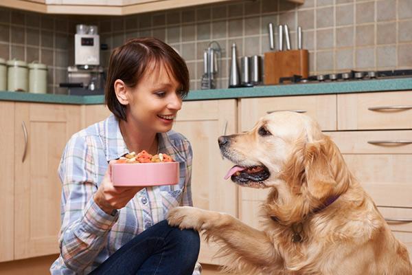 fediaf publica una guia sobre las necesidades nutricionales de los perros adultos