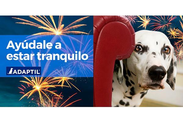 tu perro tiene miedo a los ruidos confa en adaptil