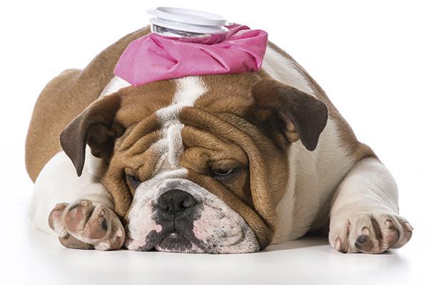tratamiento de la epilepsia idioptica canina ii