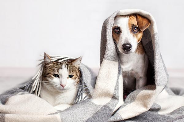 en la ue hay mas de 140 millones de perros y gatos