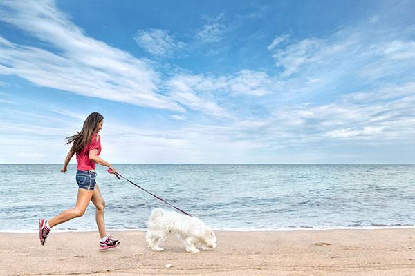 las mejores playas para disfrutar del verano con tu mascota