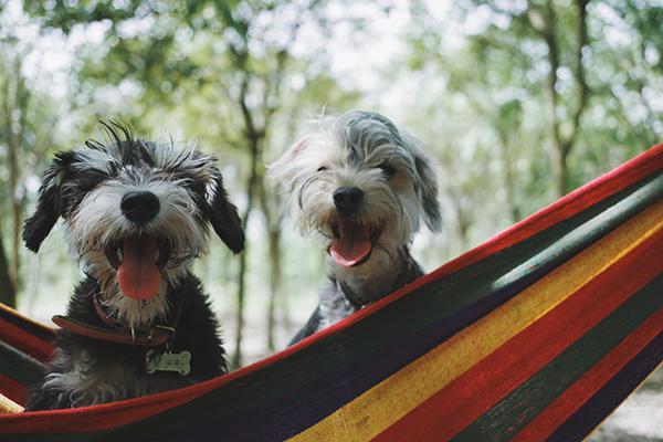 recomendaciones del icovv para viajar con nuestras mascotas