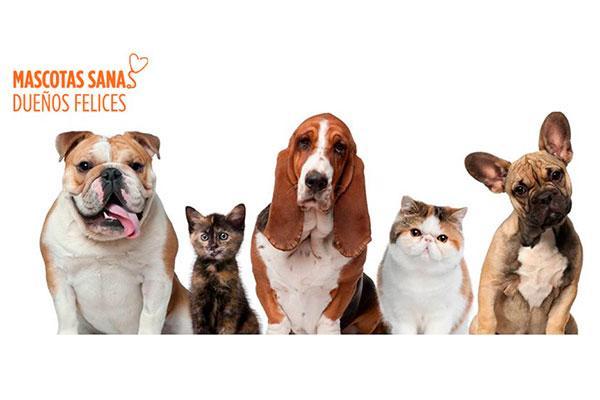 el blog mascotas sanas dueos felices se renueva