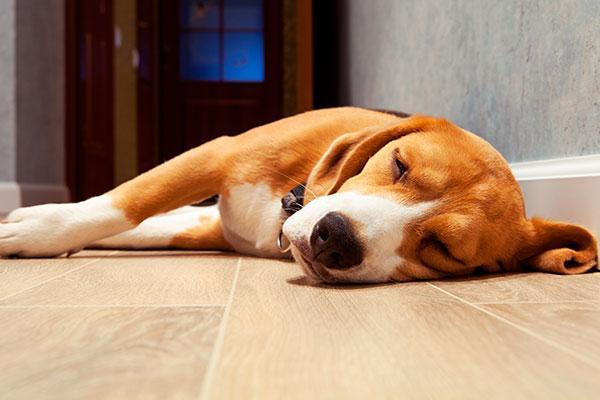 la depresion postvacacional tambien puede afectar a los perros
