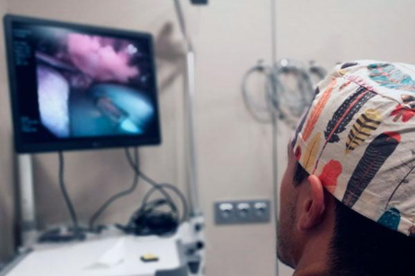 el hospital veterinari del mar mejora su area de endoscopia