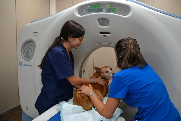 el hospital veterinari glries incorpora un nuevo tac para animales