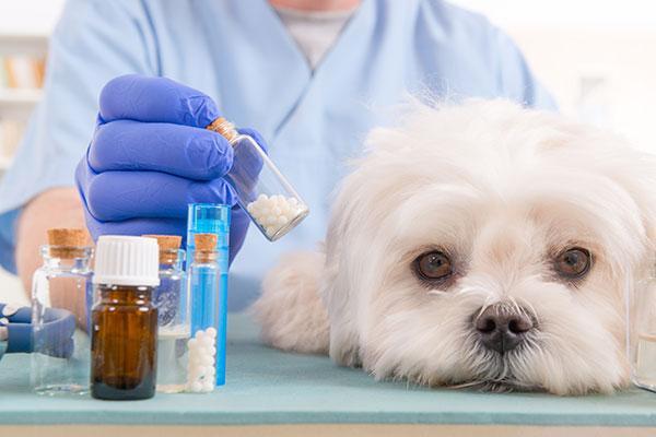 el mercado de medicamentos del sector de animales de compaa muestra signos de recuperacin