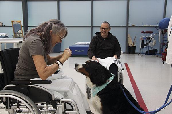 los perros entran en el hospital la fe para curar a los enfermos