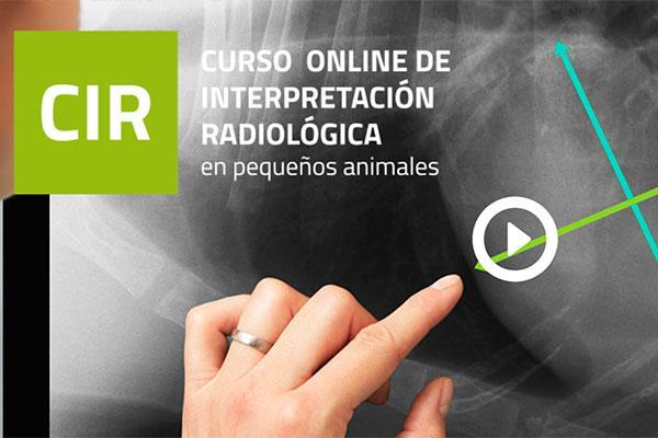 vuelve el curso de interpretacion radiologica en pequenos animales de colvema