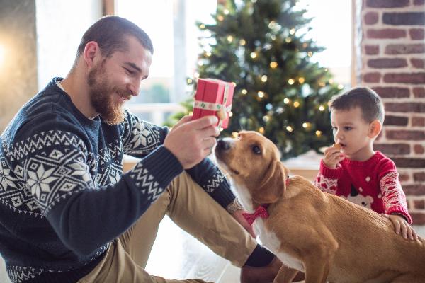1 de cada 10 familias espanolas preve regalar un animal de compania por navidad