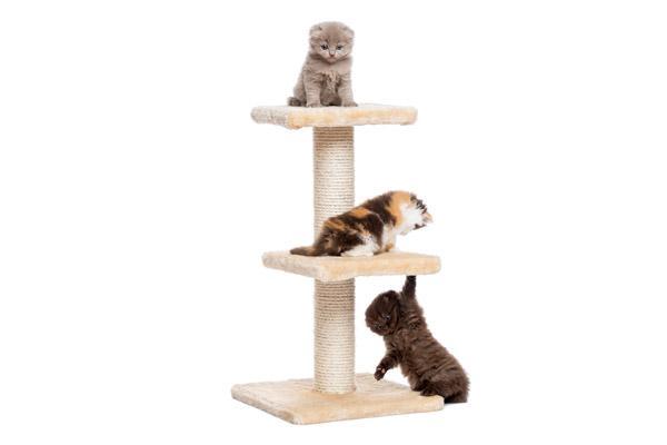 claves para gatunizar tu casa y evitarle peligros a tu gato