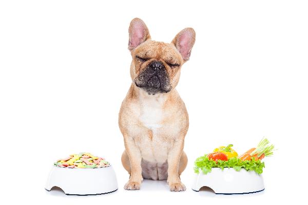 la dieta clave para mejorar la artrosis en perros con sobrepeso