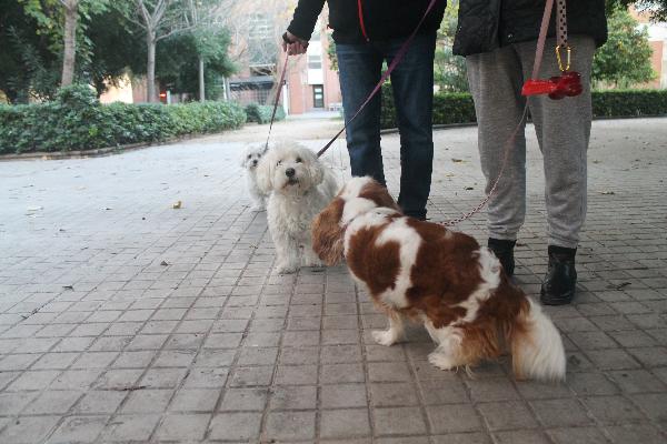 icoval alerta de que los test de adn contra las heces caninas no son eficaces