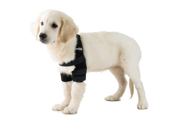 ortesis para mejorar la calidad de vida de los perros