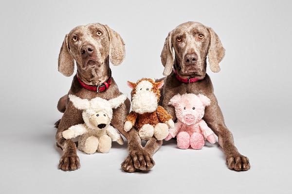 el concepto que tenemos de nuestra mascota ha evolucionado por tanto sus cuidados y juguetes tambien lo han hecho