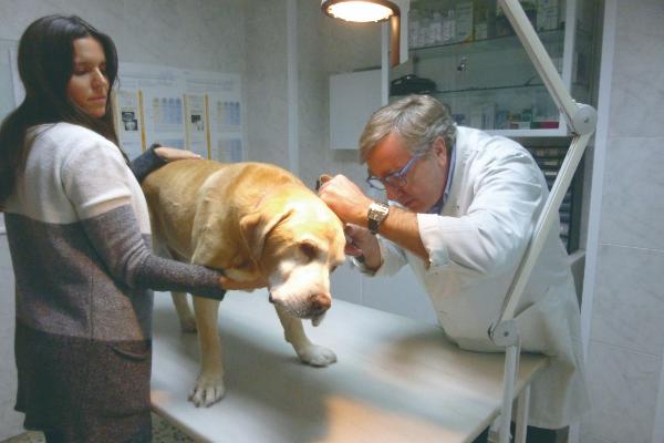 en dermatologa se ha producido un gran avance en la preparacin de los especialistas