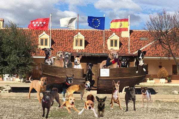 gloria pets colabora con la fundacion arca de noe