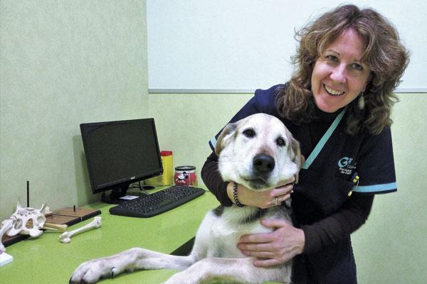 en oncologia veterinaria valoramos mas la calidad que la cantidad de vida