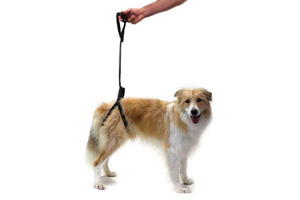 un arnes para dar seguridad estabilidad y soporte a los perros con movilidad reducida