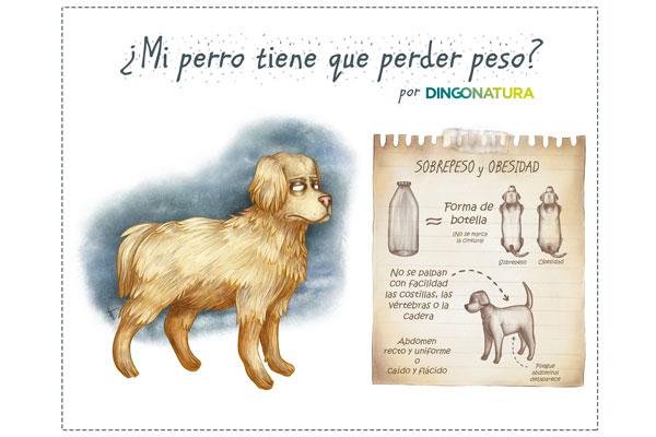 claves para controlar el peso de nuestras mascotas