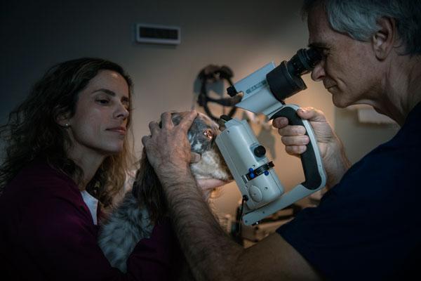 el ivo impartir nuevos cursos de oftalmologa veterinaria dirigidos por paco sim