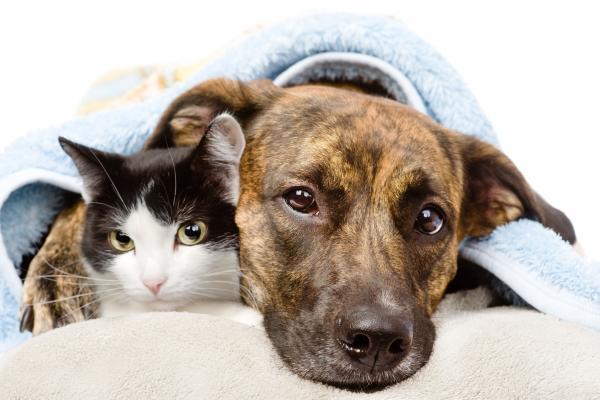 la reduccion del iva veterinario se aleja