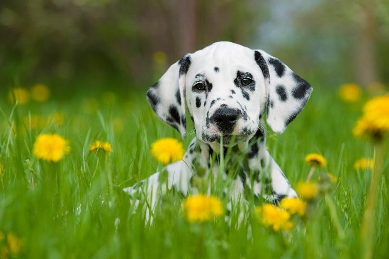 consejos veterinarios de primavera por el icov de valencia