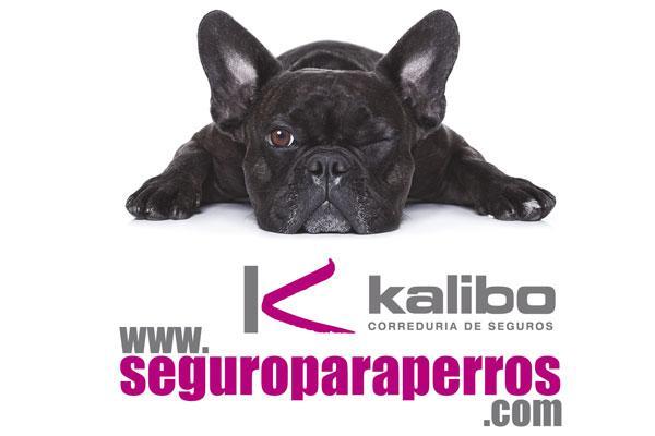 kalibo da un nuevo impulso a sus seguros para perros