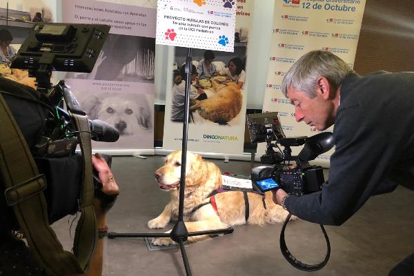 perros para mejorar el bienestar de los nios de la uci del 12 de octubre