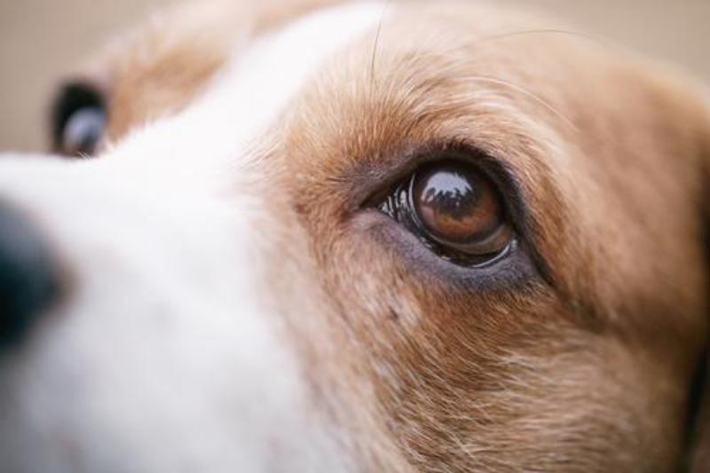 pharmadiet veterinaria mantiene su compromiso con la medicina ocular