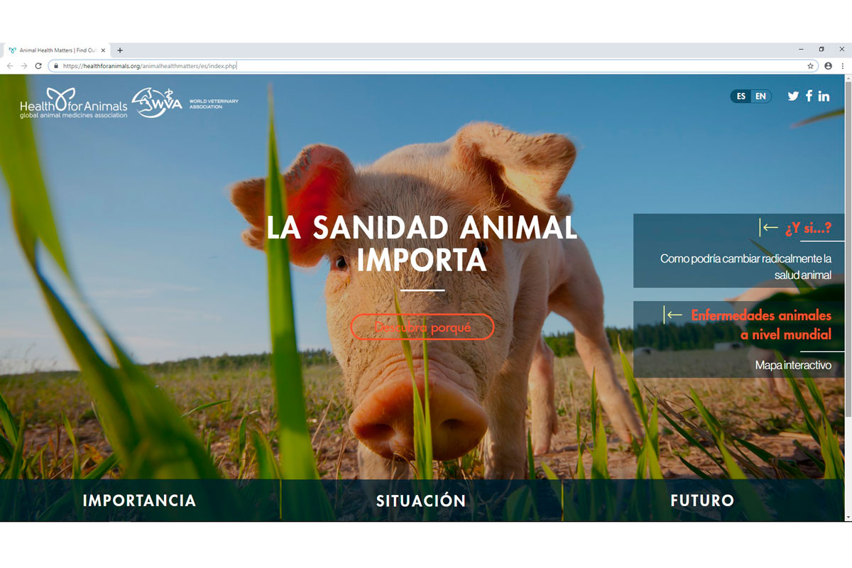 nace la sanidad animal importa una nueva web en espanol sobre salud veterinaria