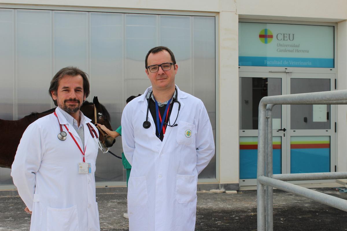 el hcv ceu pionero en el uso de electroquimioterapia en oncologia veterinaria