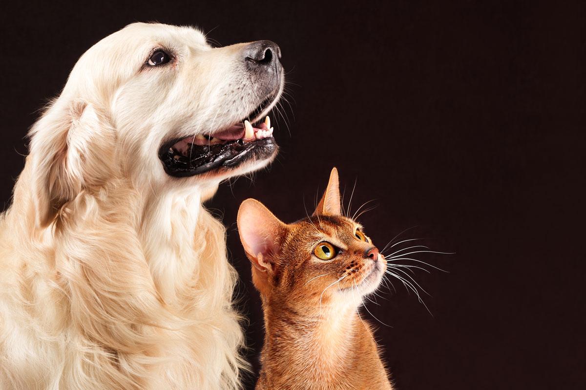 vuelven los premios bienestar animal de colvema