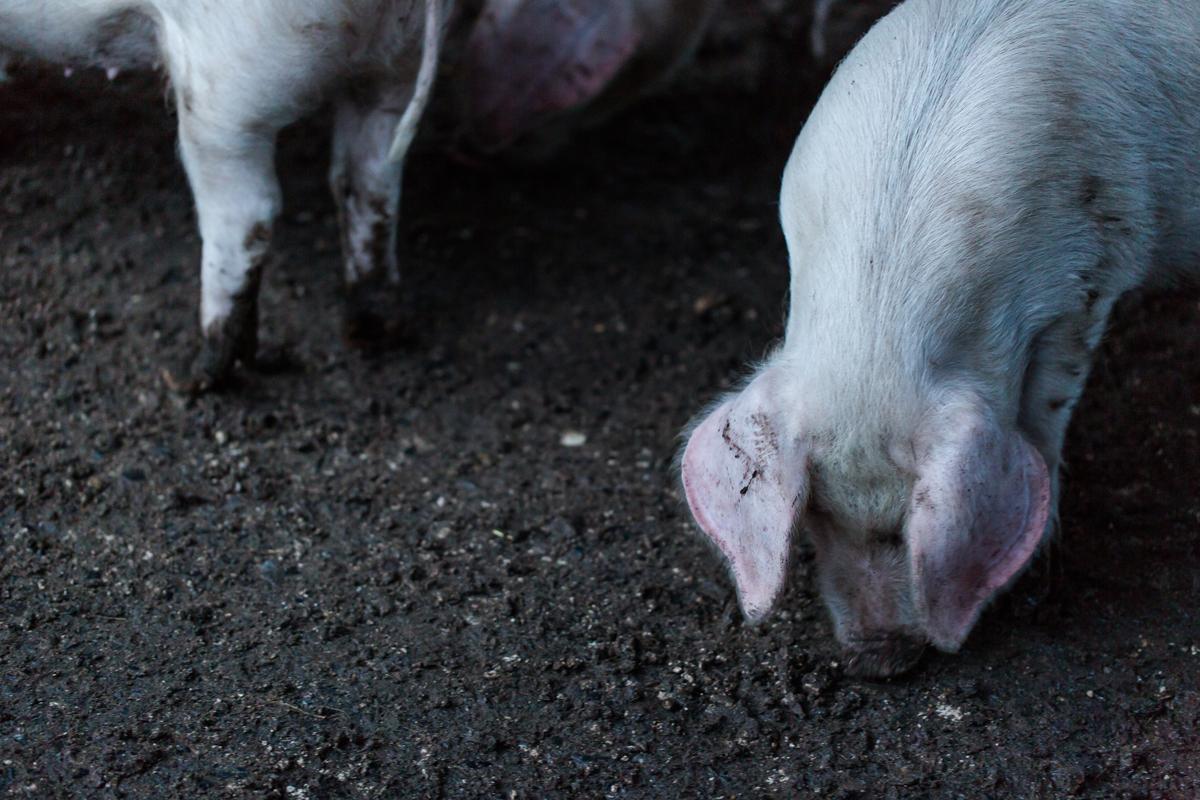 bioseguridad y enfermedades animales transfronterizas las conclusiones del consejo europeo