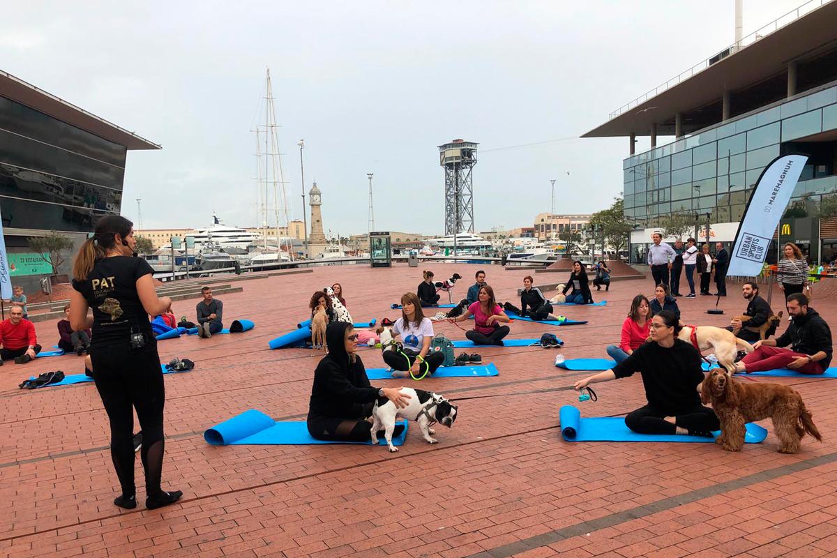 pat educadora canina y adaptilsupsup organizan sesiones de doga en barcelona
