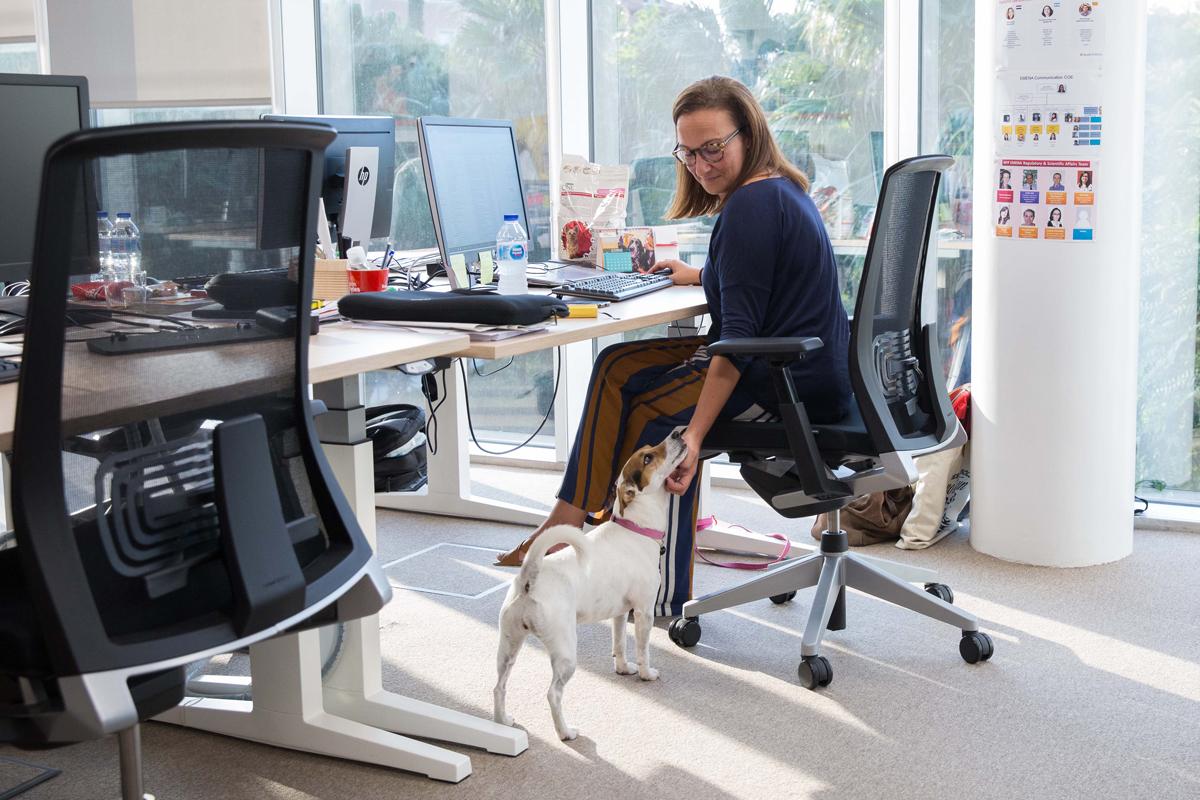 los empleados que llevan su mascota a la oficina muestran un 22 mas de satisfaccion en su trabajo