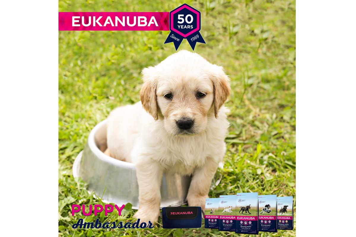 eukanuba busca el proximo puppy ambassador