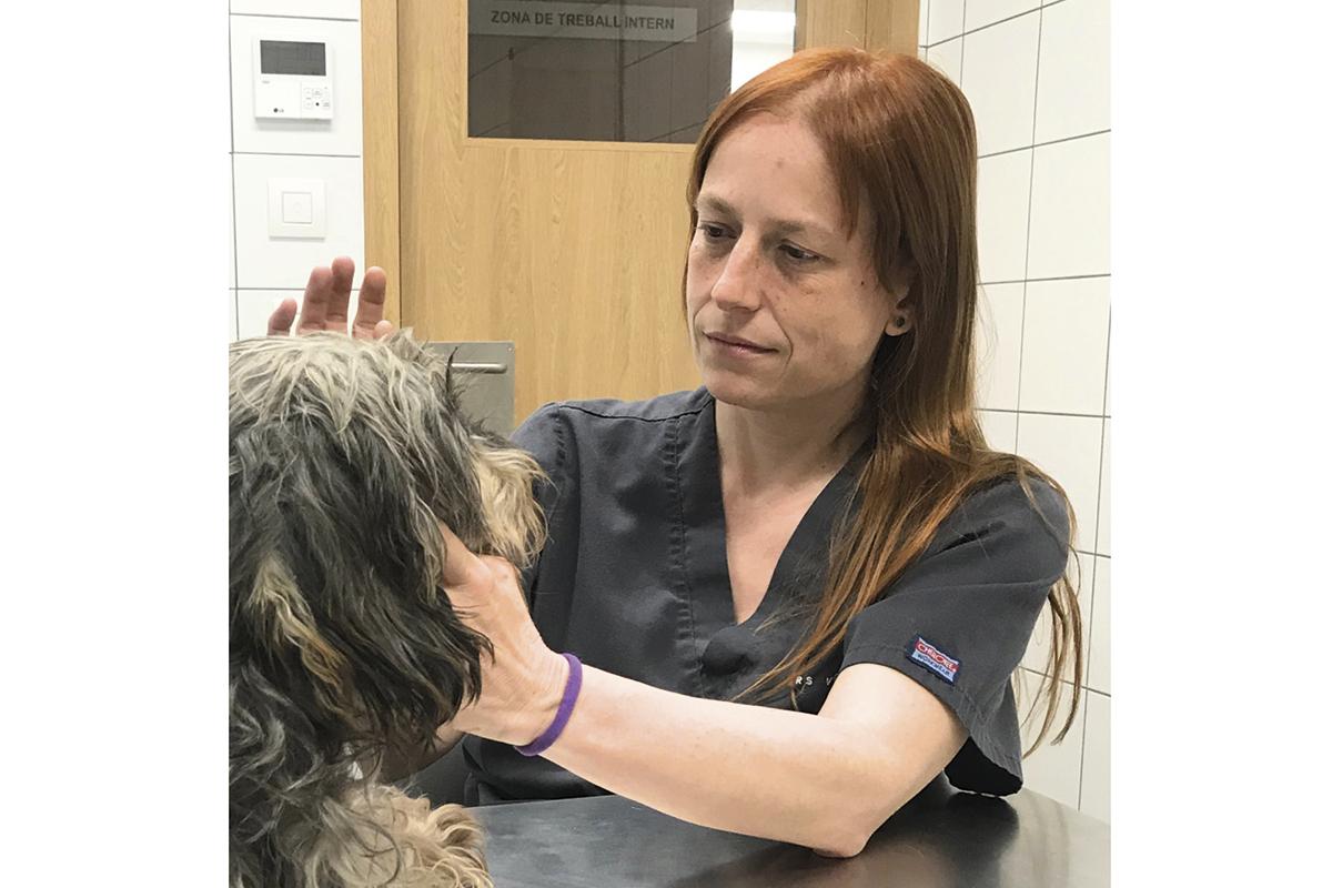 es necesario reconocer a los veterinarios que han realizado una formacin especfica y reglada en una especialidad