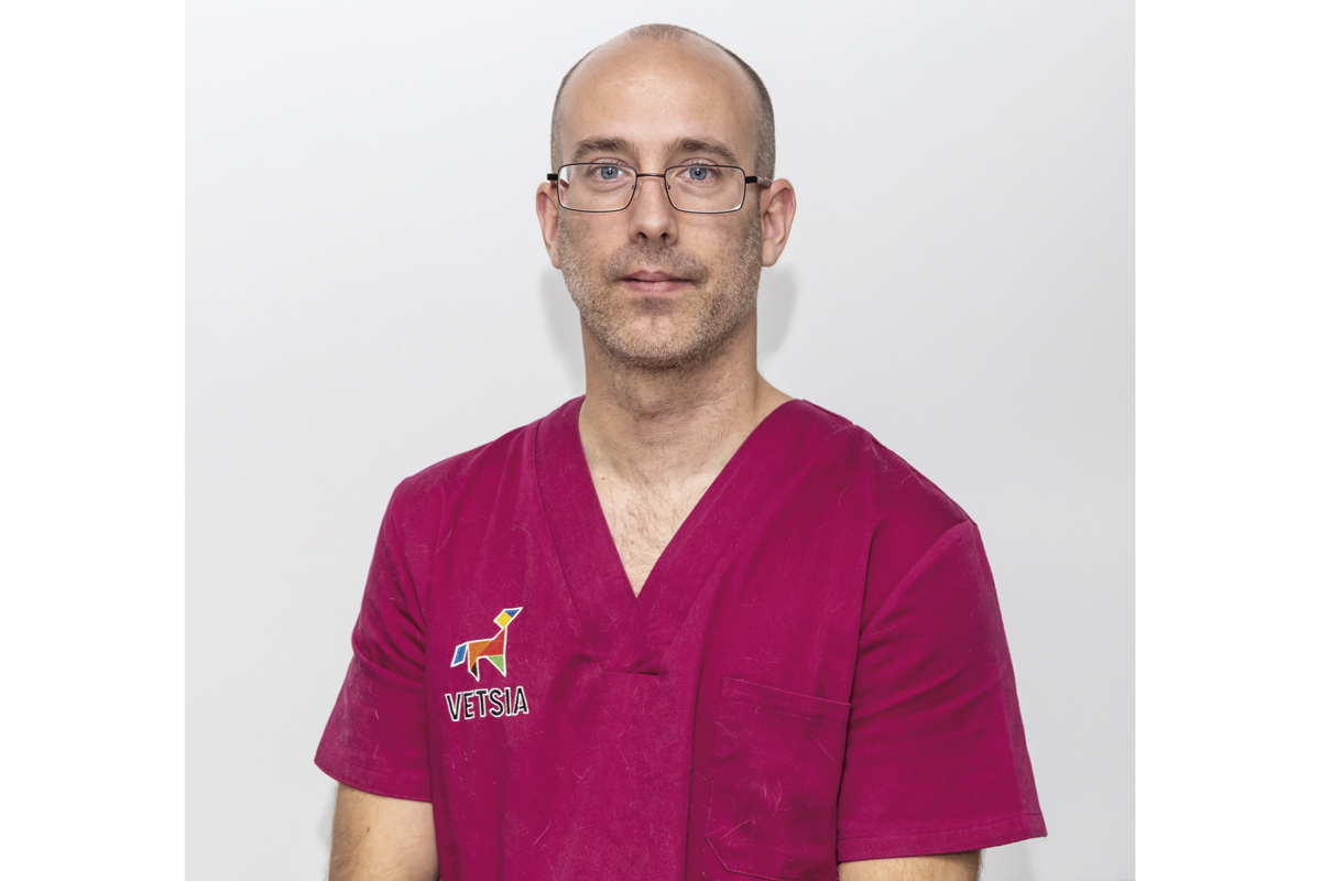 la neurologa veterinaria en espaa est en pleno desarrollo