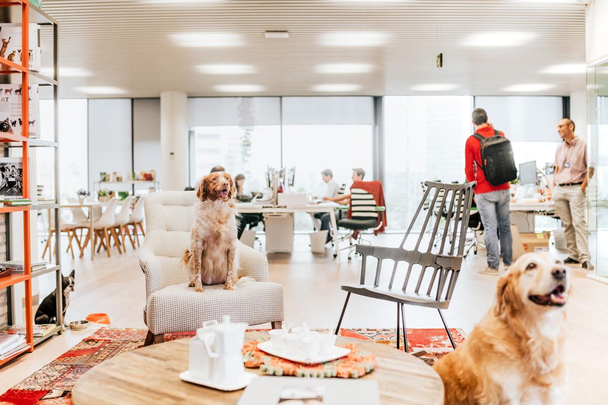 los perros pueden ser los mejores aliados para reducir el estrs en el trabajo