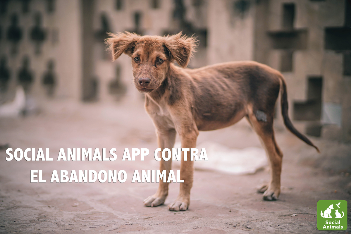 social animals app la red social que lucha contra el abandono animal