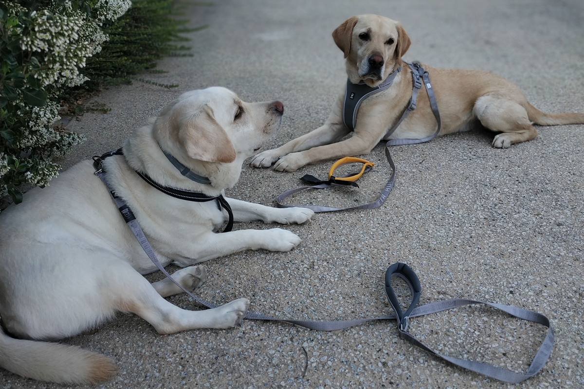 stangest colaborar con buena pata  intervenciones asistidas con animales