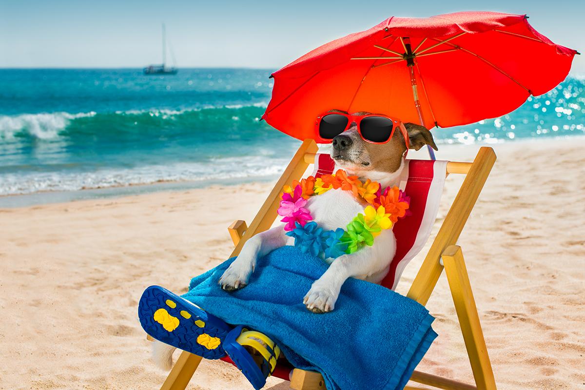 claves para ir a la playa con tu perro