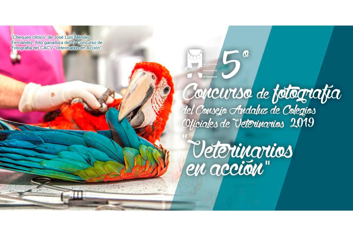 el consejo andaluz de colegios oficiales de veterinarios convoca el v concurso de fotografa veterinarios en accin