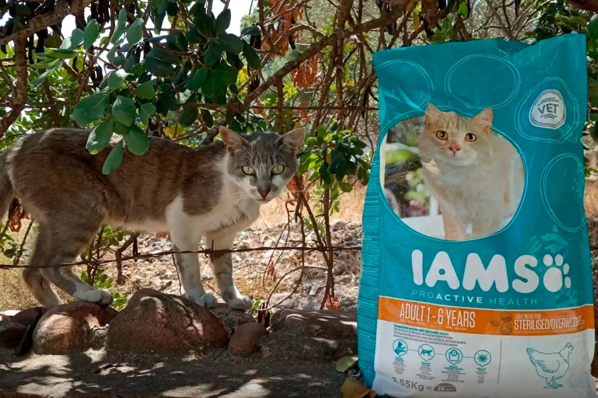 iams alimenta los gatos de la colonia felina godella
