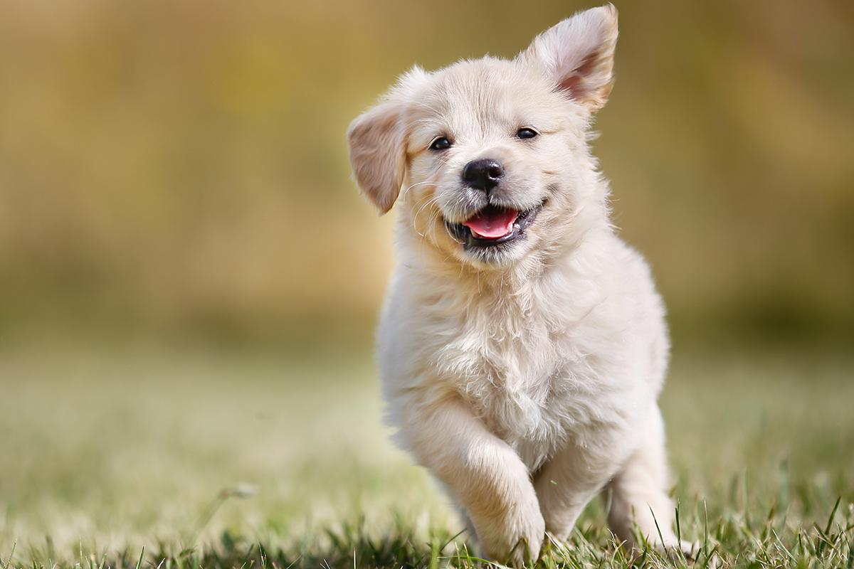 nace pepecos el primer metabuscador de animales en adopcin