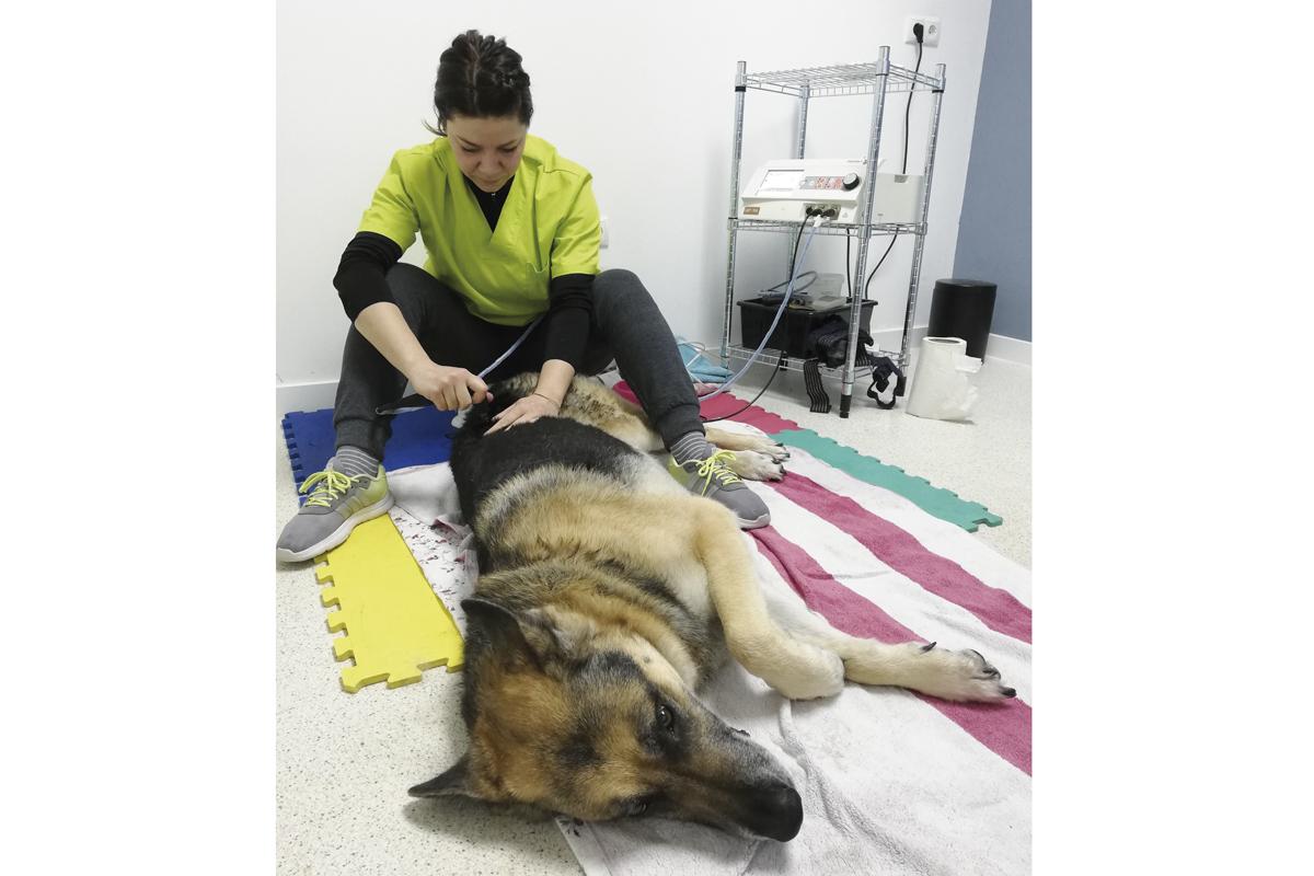radiofrecuencia una nueva herramienta para la rehabilitacion animal